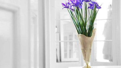 It's Iris Day